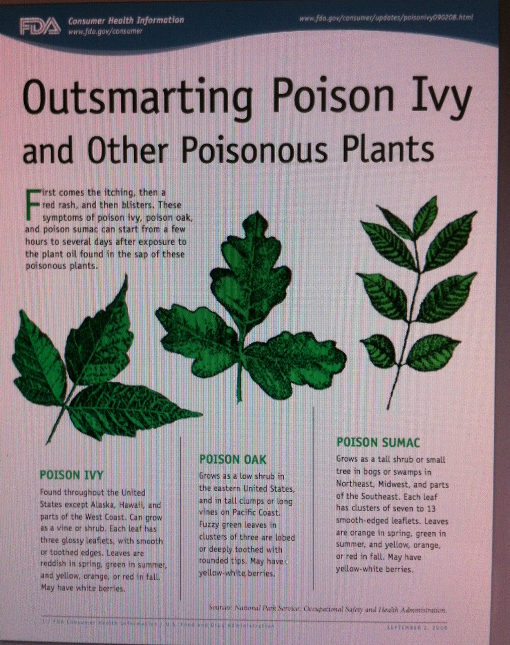 How to Identify Poison Oak 13 Steps with Pictures  wikiHow