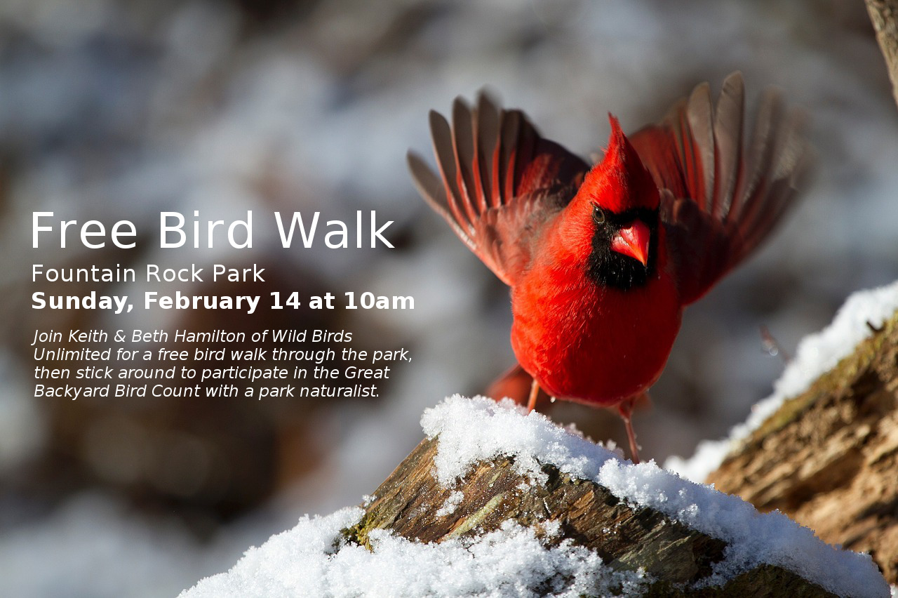 join us for a free bird walk and participate in the backyard bird